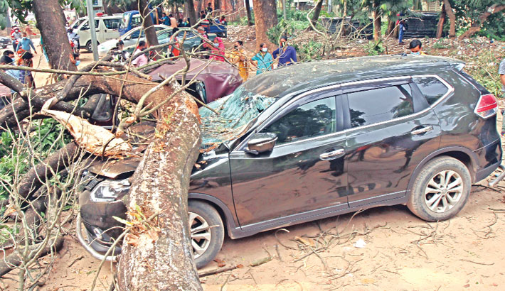 Dead tree falls on two CNG-run auto-rickshaws and a car