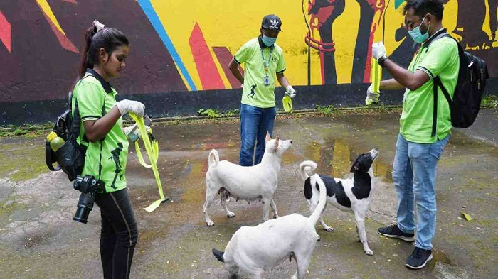 No relocation of stray dogs for now: Attorney general