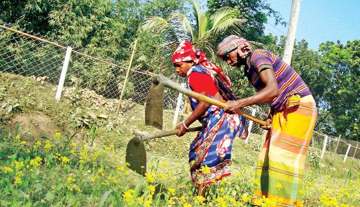 Veg farming changes lot of poor women in Narsingdi