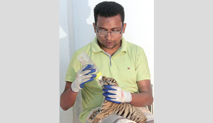Lone surviving tiger cub at Ctg Zoo not out of danger yet