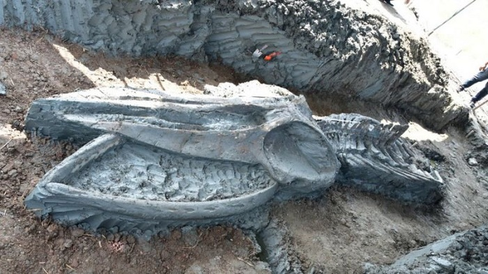 Whale skeleton discovered in Thailand thought to be 5,000 years old