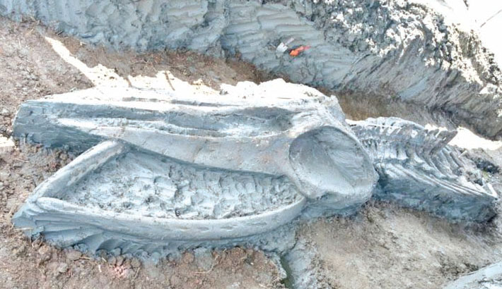Rare whale skeleton discovered in Thailand