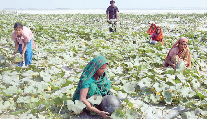 Vegetable farming on riverbeds makes farmers happy