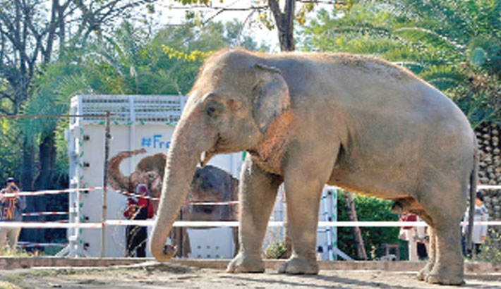World's loneliest elephant heads to Cambodia