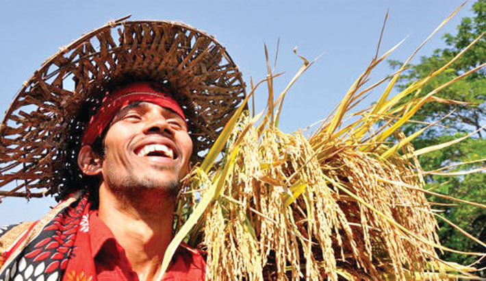 High Aman price brings smile to farmers