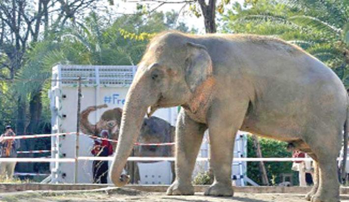 'World's loneliest elephant' lands in Cambodia