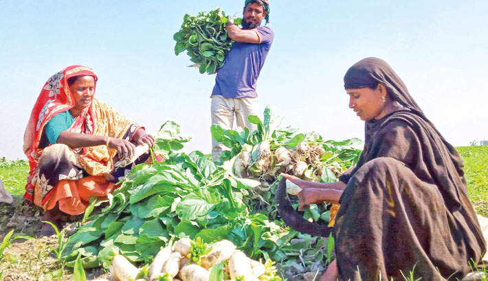 Farmer family members are passing busy times in sorting out radish