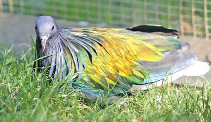 Rare elderly birds stolen from California zoo