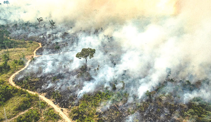 Brazil's Amazon deforestation surges to 12-yr high
