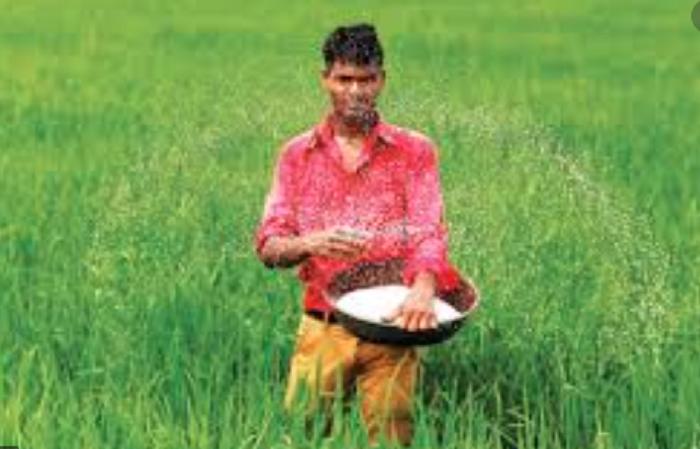 Cabinet purchase body nods import of rice, fertiliser, petroleum