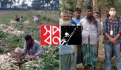 'Shwapno' stands beside the farmers of Lalmonirhat