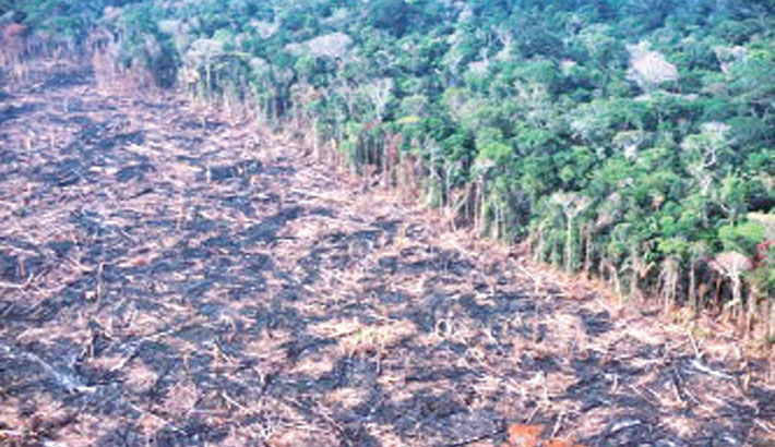 Deforestation wiped out 8pc of Amazon in 18 yrs