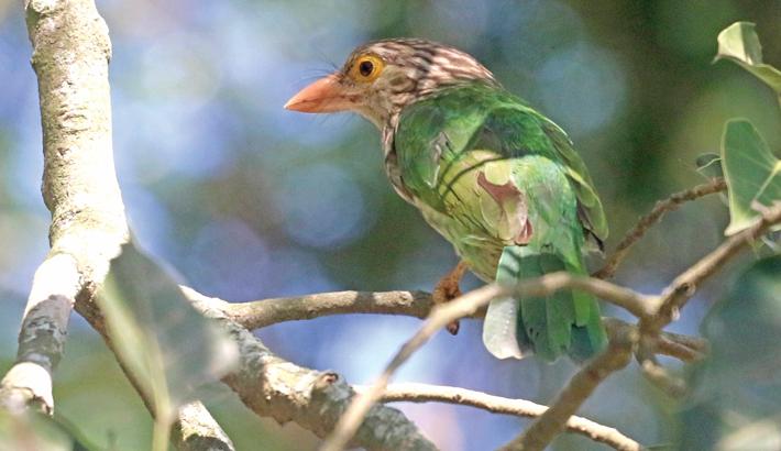 An endangered species of bird