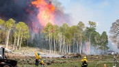 Wildfire smoke may spread infectious disease