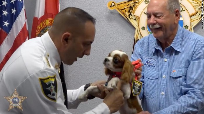 A puppy rescued from the jaws of alligator has been honored as a 'Deputy Dog'