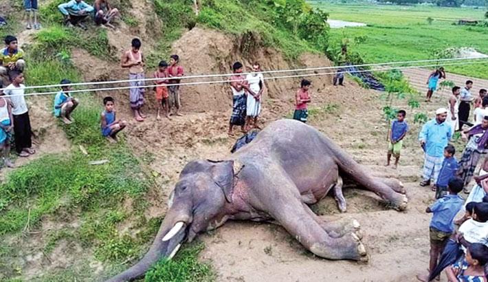 Wild elephants must be saved
