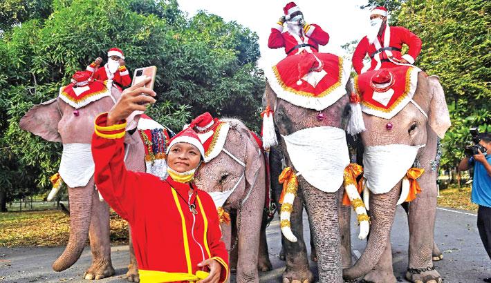 Elephants from the Ayutthaya Elephant Palace