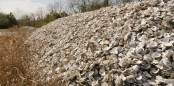 Oyster shells given new life as reefs off Texas coast