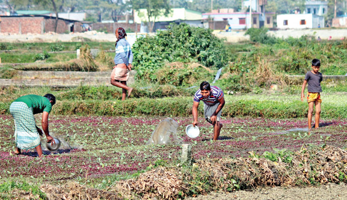 Farmers are busy watering his vegetable field