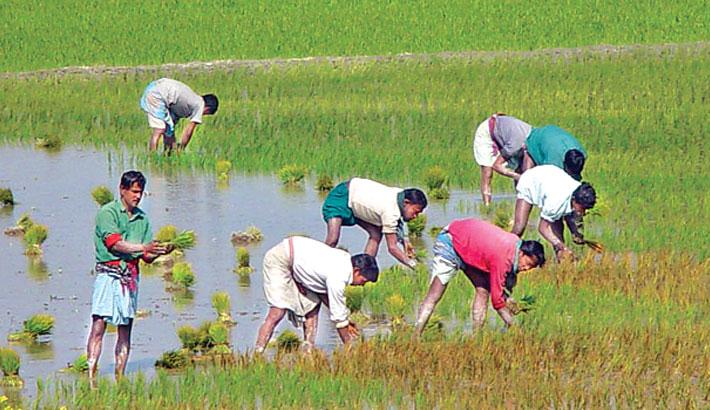 Govt plans big to boost  Boro production