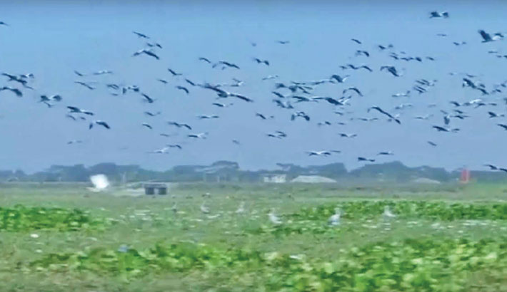 Faridpur's Nurpur Beel abuzz with migratory birds