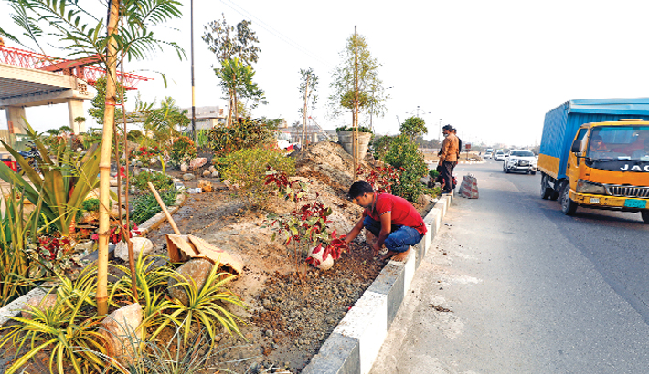 DNCC authorities plant trees on a road divider