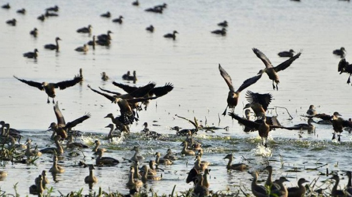 Cycle rally against migratory bird hunting