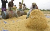 Agri sector shows resilience amid pandemic