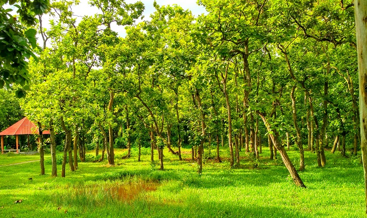 'Bangladesh to be turned into green Bengal'