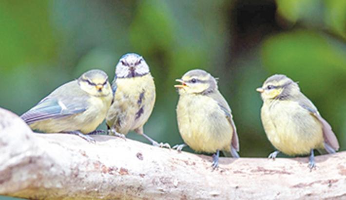Hearing birdsong boosts human wellbeing: Study