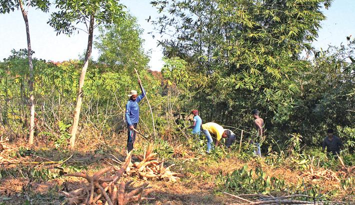 PRAN aims to collect 30000MT cassava this season