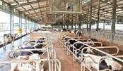 Bangladesh's first hi-tech dairy farm launched in Rangpur