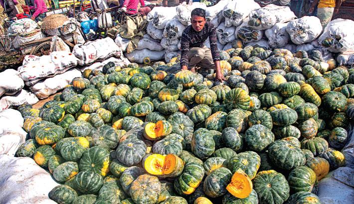 Bumper production of sweet pumpkin in Bogura