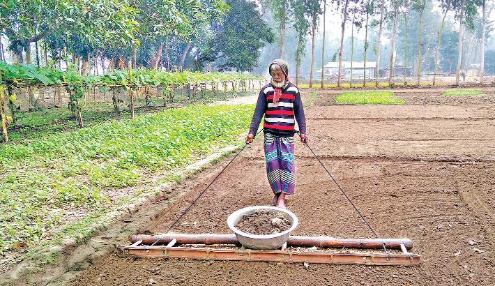 A farmer is busy preparing seedbed
