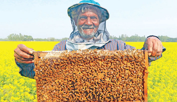 Honey farming in mustard fields brings smile to farmers