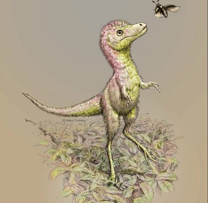 Baby tyrannosaurs dinosaurs were the 'size of a Border Collie'