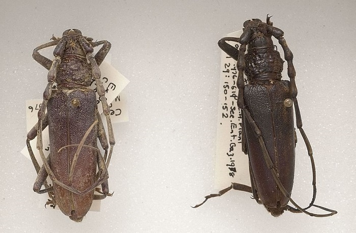 Bog beetles finally reveal their remarkable age