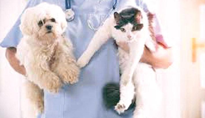Cats, dogs may need corona vaccine
