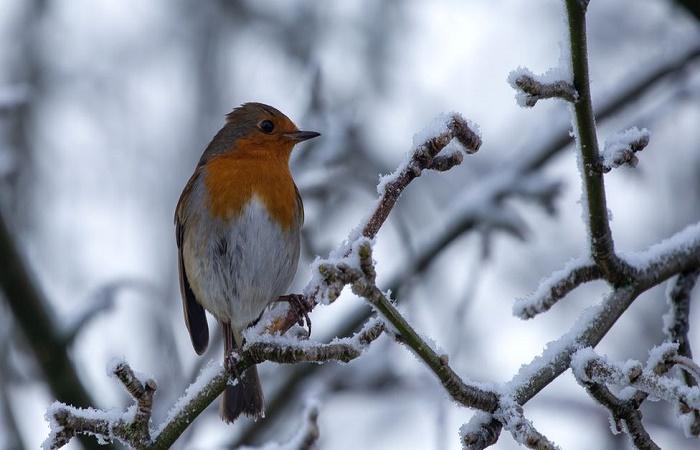 Traffic noise impairs songbirds' abilities