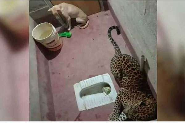 Dog gets trapped inside toilet with leopard for hours in Karnataka