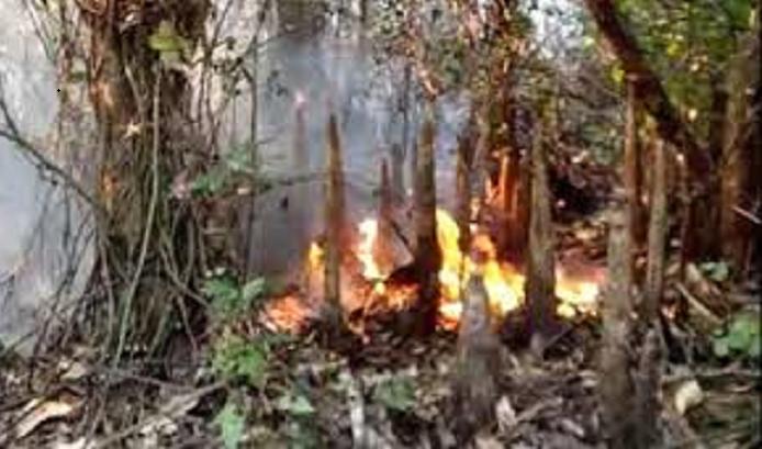 Sundarbans fire brought under control