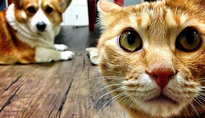 Pet cats and dogs to be tested for Covid-19 in South Korea