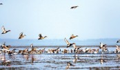 Migratory Birds: Indicators of state of the environment