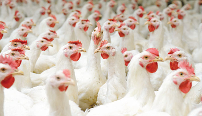 Russia detects first case of H5N8 avian flu in humans