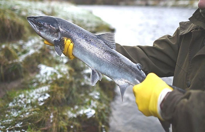 Extinction: Freshwater fish in 'catastrophic' decline