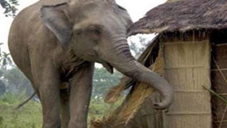 Wild elephant kills disabled girl in Bandarban