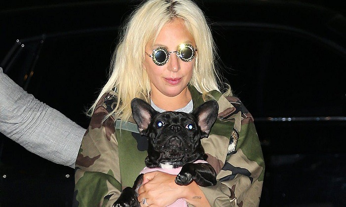 Lady Gaga's dogs stolen in Hollywood shooting: US media