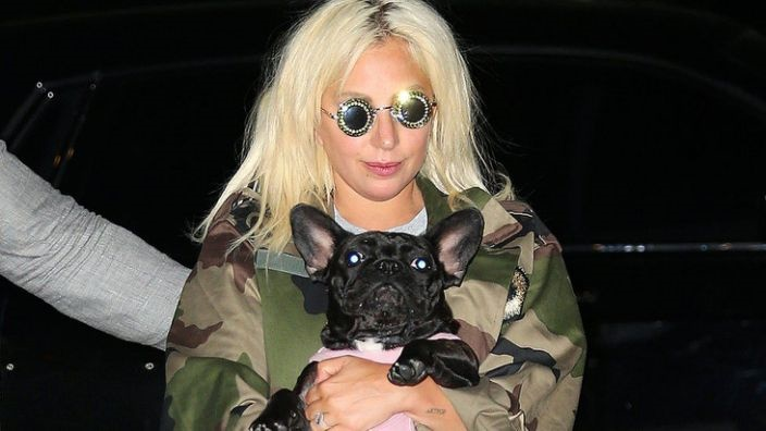 Lady Gaga's dogs found safe after armed robbery