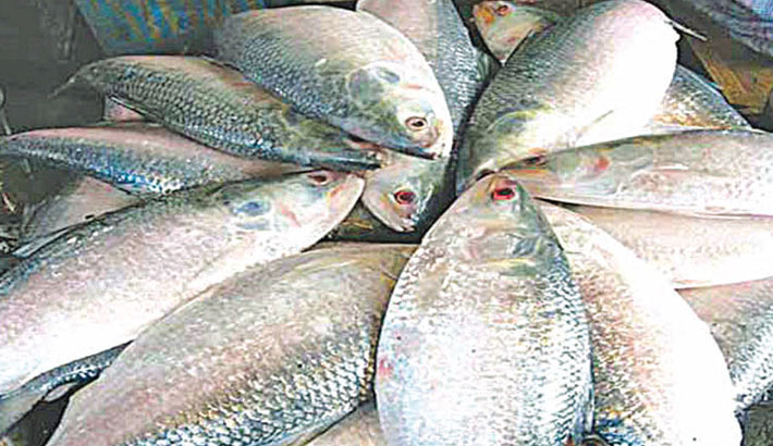 2-month fishing ban in 5 hilsa sanctuaries from today