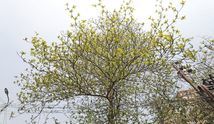 Spring brings life to nature